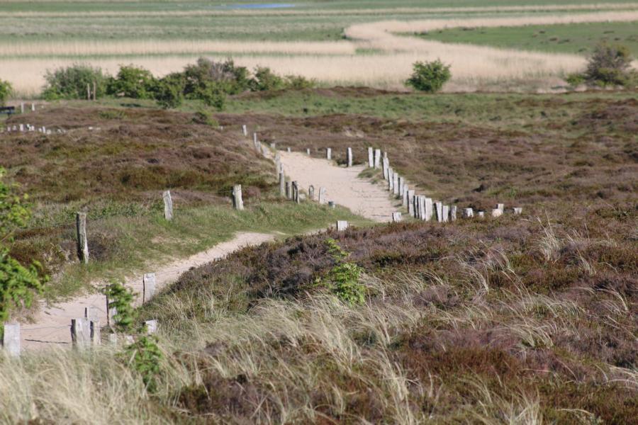 Typisch Sylt: Radfahren und Wandern durch Dünen