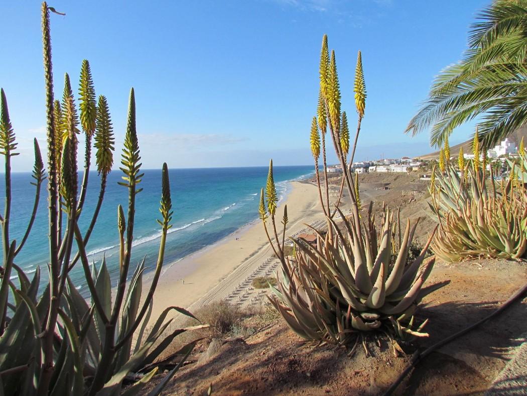 Typisch Fuerteventura: Kilometerlange Sandstrände