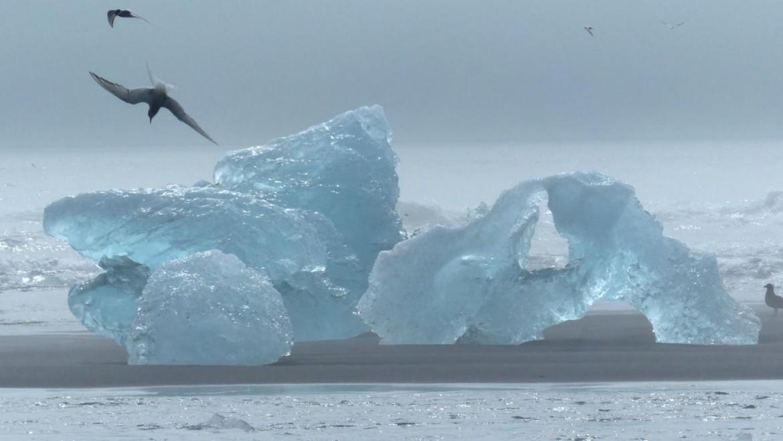 Typisch Island: Kalbende Gletscher und treibende Eisberge
