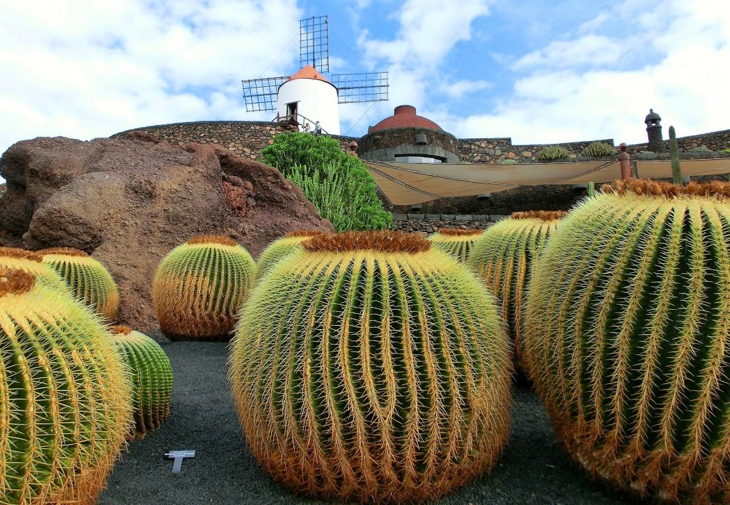 Typisch Lanzarote: Jardin du Cactus mit über 1.500 Kakteearten